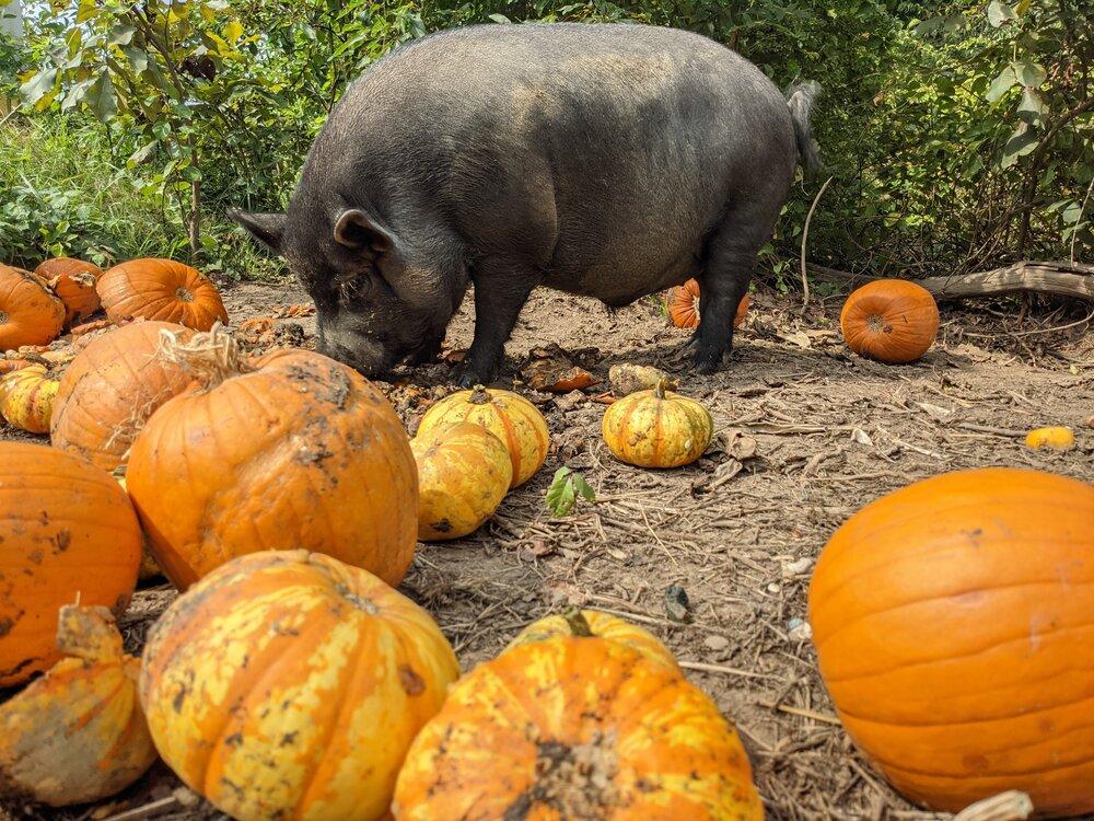 Halloween on the farm!