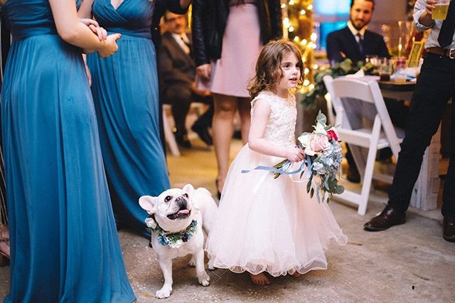 This little puppers knew what a camera was, I swear 🐶💕 . . . . #floridawedding #marrymetampabay #weddingplanning #weddingdetails #weddinginspo #weddingdesign #floridadestinationwedding #eventdesigner #ido #isaidyes #engaged #outdoorwedding #weddingdesign #DIYwedding #weddingtrends #weddingdress #theknot #sunsetwedding #weddingportrait #tampaweddingphotographer #floridabride #bridalportrait #weddingideas #bridalpuppy #weddingpup #weddingpuppy #weddingdog #dogsatweddings  #twistedoaksweddings #twistedoakfarmvb