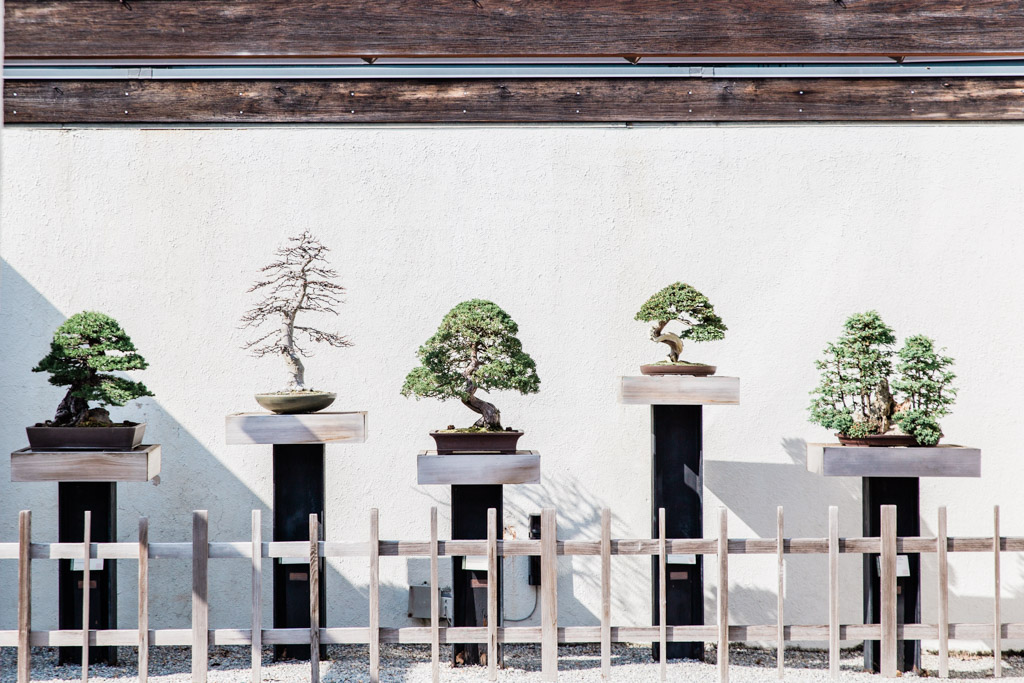 Collection of five bonsai trees at the National Arboretum in Washington D.C.