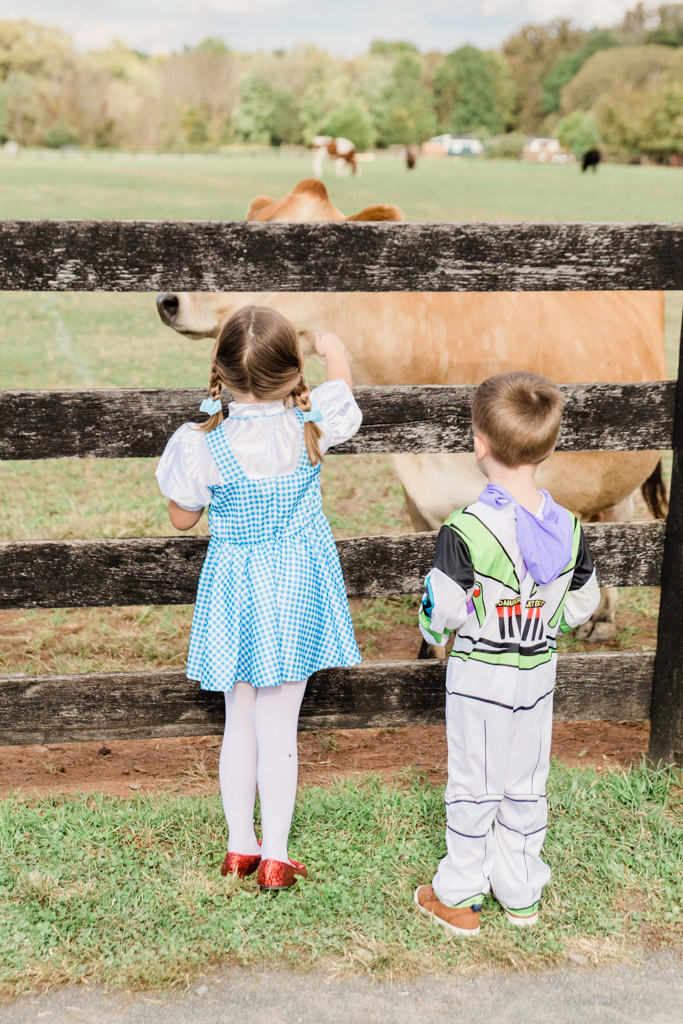 Kids in Halloween costumes looking at a brown cow behind a fence on a farm.