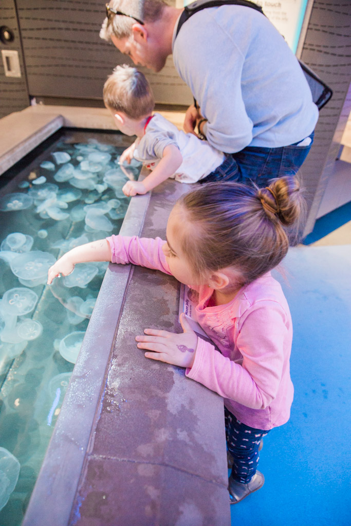 Little girl and boy reaching into fish tank to touch moon jellies at the aquarium.
