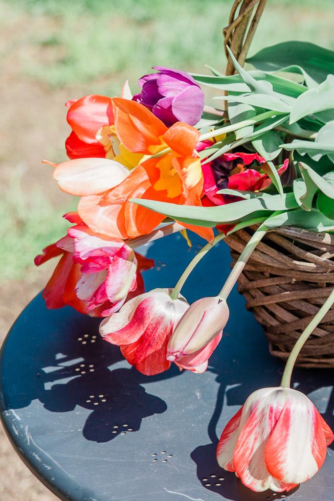 tulips10abroadwife.jpg