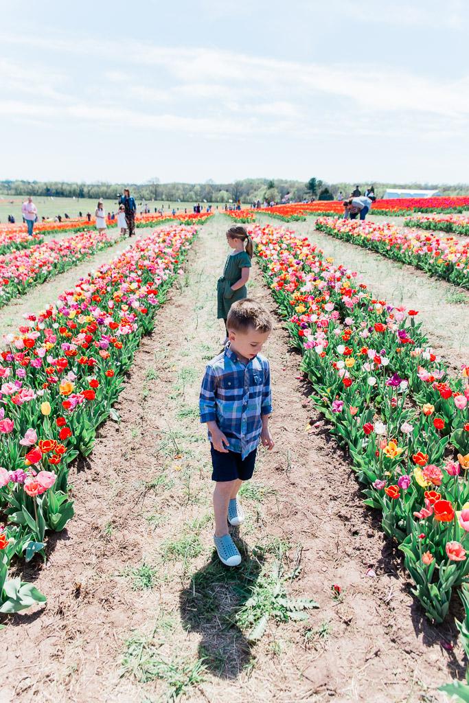 tulips5abroadwife.jpg