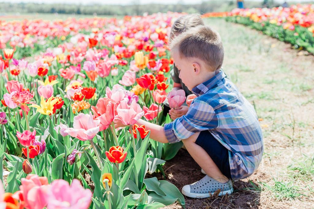 tulips7abroadwife.jpg