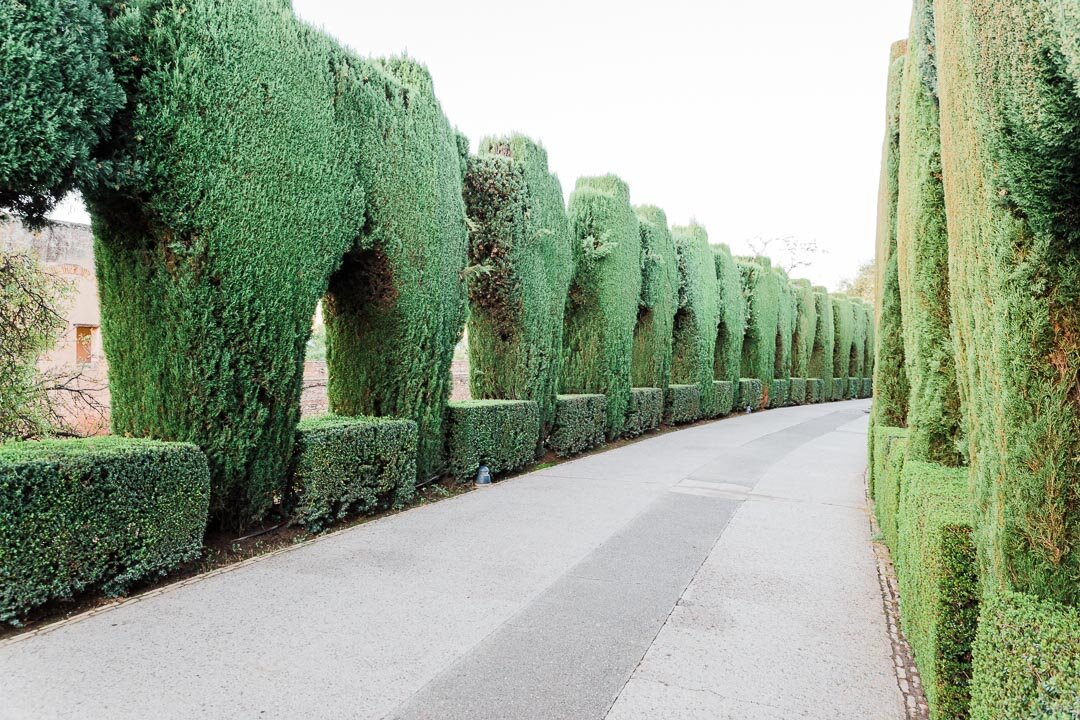 Tall, sculpted, green hedges along a cement path at Alhambra in Granada, Spain.