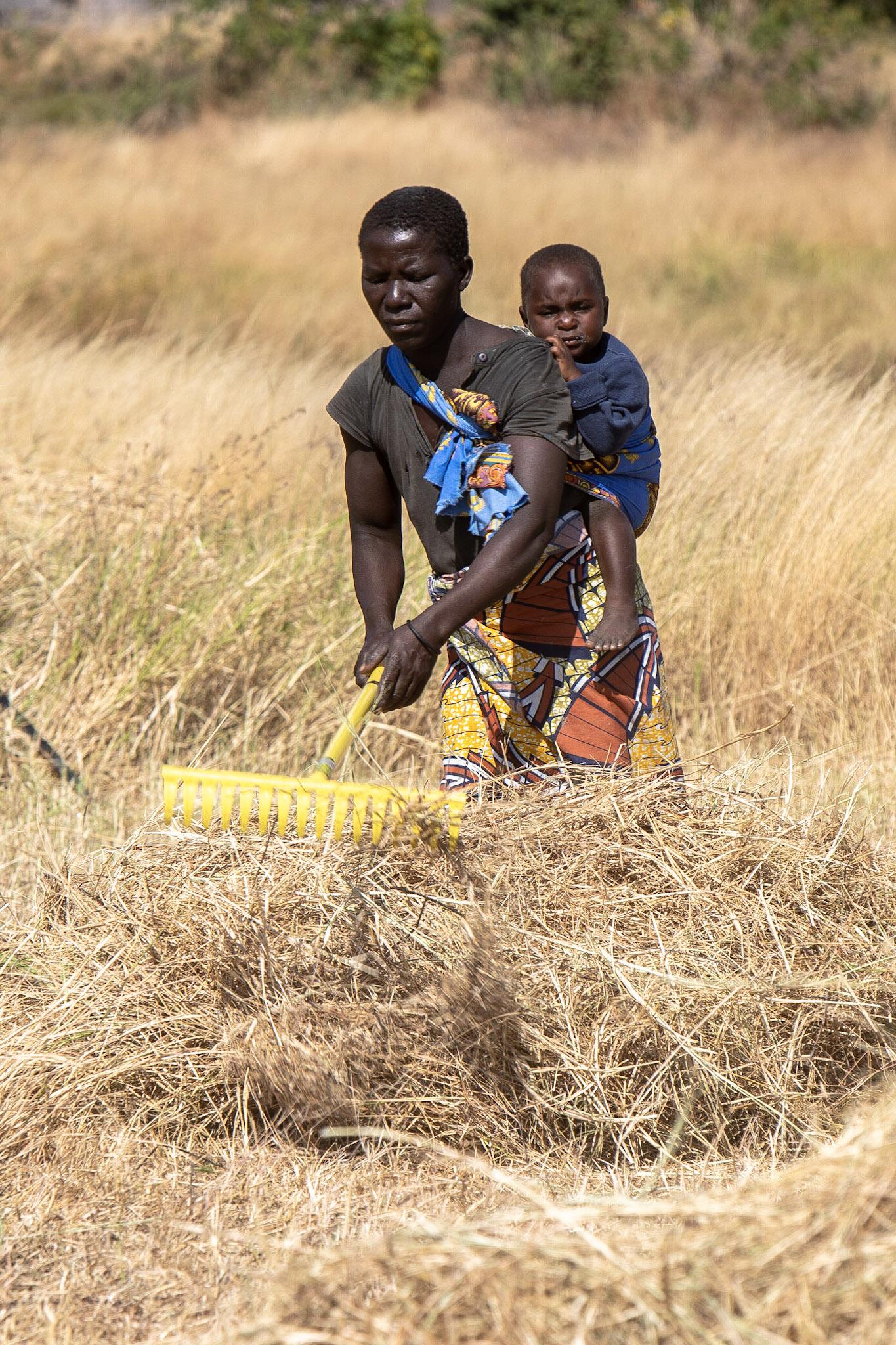 Adam Dickens 2018 - IMS-Naturally Africa, Malawi 3510.jpg