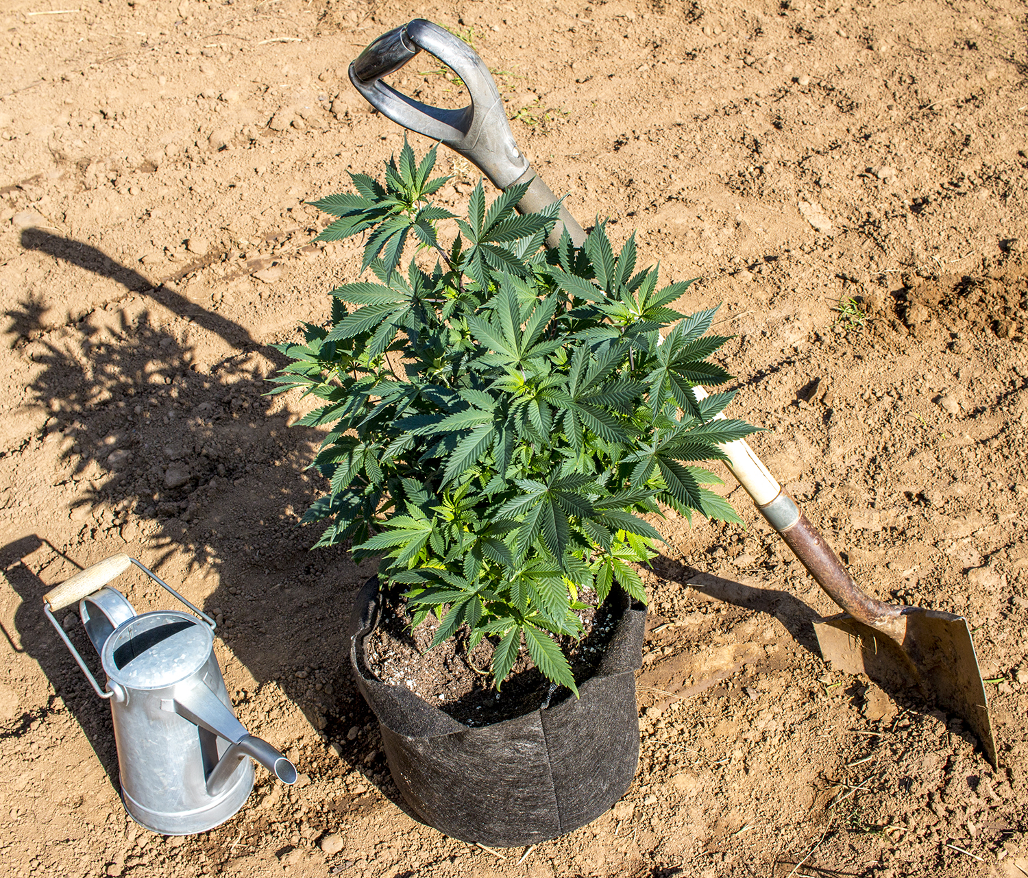 05a 20160529_outdoor_planting.jpg