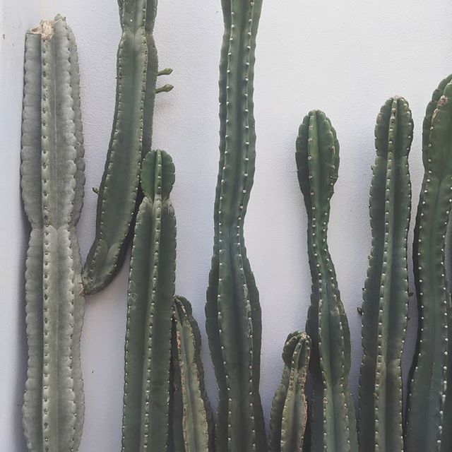 Biophilia: /bʌɪə(ʊ)ˈfɪlɪə/ 🌵 noun An innate and genetically determined affinity of human beings with the natural world ... 🌵Cacti love at @the.succulent.corner with @venus.botanica @_hayley_yan