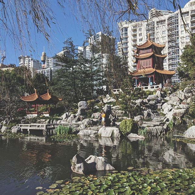 Exploring the quite spaces in the city... 💚 Sydney CBD can be a stressful environment (think navigating town hall during peak hour or driving around central) these induce cortisol secretion (a stress hormone), places like the Chinese garden of friendship reduce cortisol and promote relaxation. 💚 Prolonged exposure to cortisol can lead to irritability, fatigue, weight gain, blood sugar dysregulation and high blood pressure. 💚 Spending time in nature, practicing mindfulness and socialising can help us cope with feelings of stress and anxiety. 💚 If you struggle with these symptoms and need support herbal and nutritional medicine can give you another tool to enhance resiliance. 💚 Contact info in bio if you would like to know more