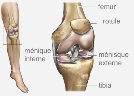 ihttp://www.chirurgie-orthopedique-nice.com/chirurgie_lesions_meniscales.html