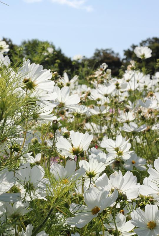 Sussex-Flower-Farm-4