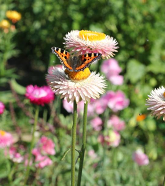 Sussex-Flower-Farm-7