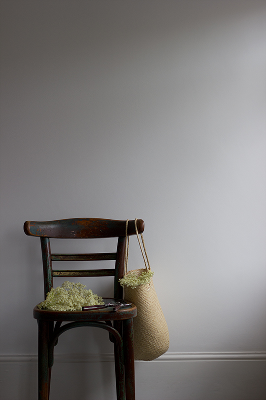 elderflower-s1.jpg