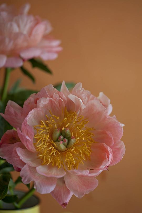 Janice-Issitt-my-fave-flower-9