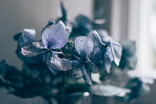 fave-flower-hannah-bullivant-3