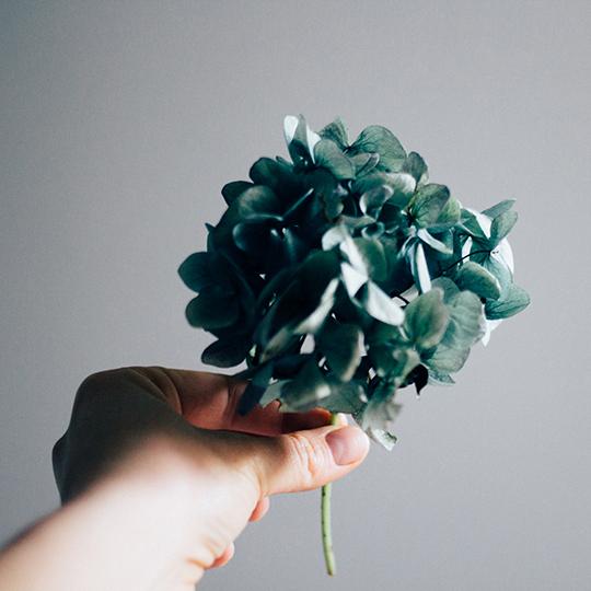 fave-flower-hannah-bullivant-4