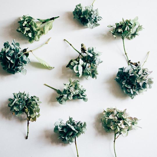 fave-flower-hannah-bullivant-7