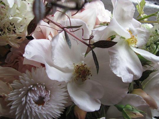 Favourite Flower - Susanne Hatwood-5034