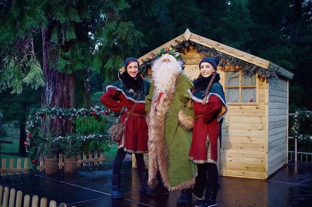 'The Tree Keepers Shoogle' - Christmas panto production at Bedgebury Pinetum, 2018 Season.