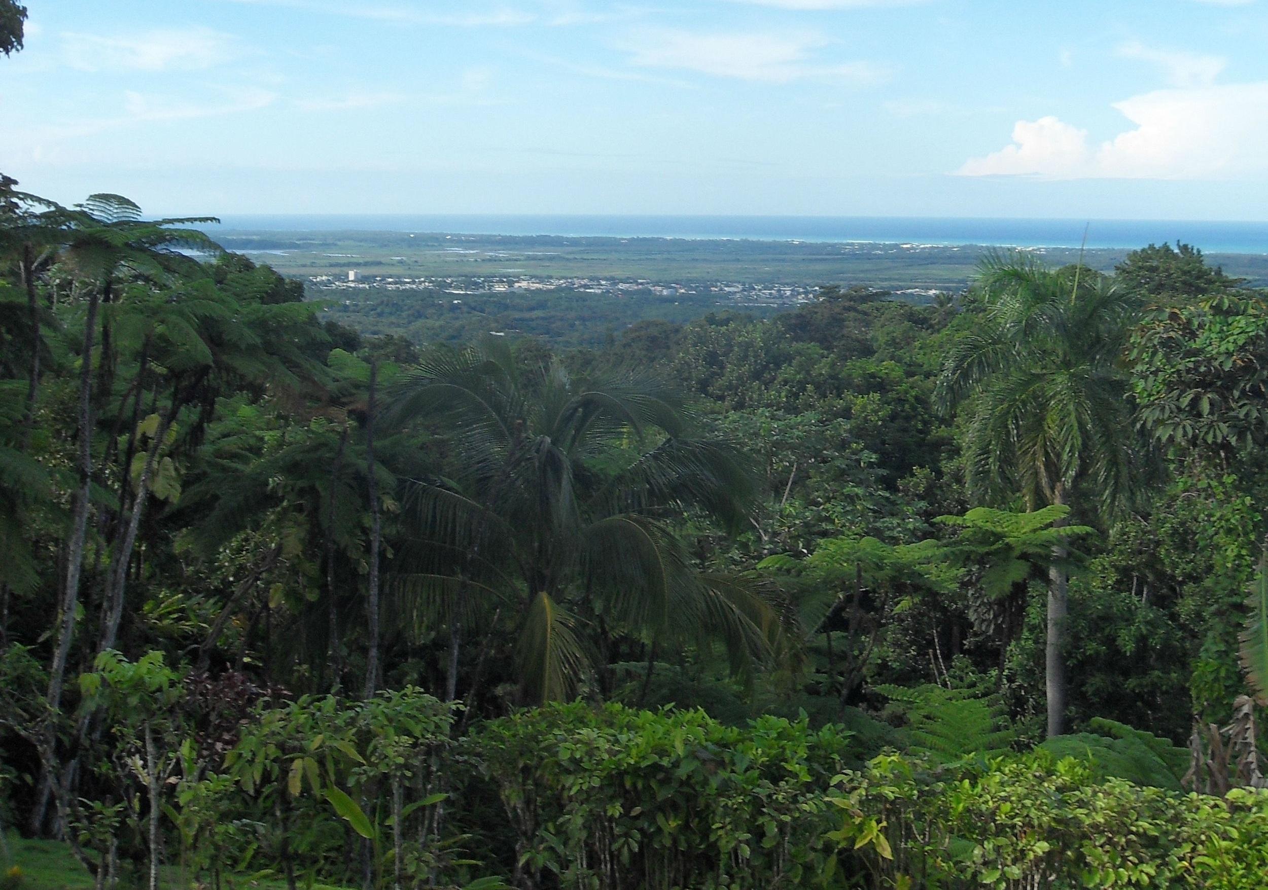 """Solo una de las muchas vistas de la jungla en la """"Villa Hermosa"""" de Margarita."""
