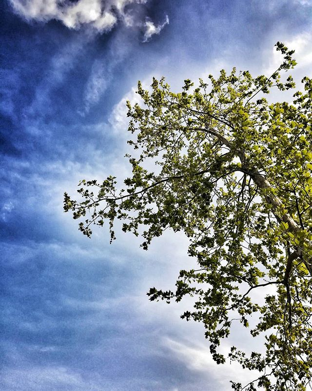 #danielEYEs #tree #sky #treeinthesky #sacile #igerspn