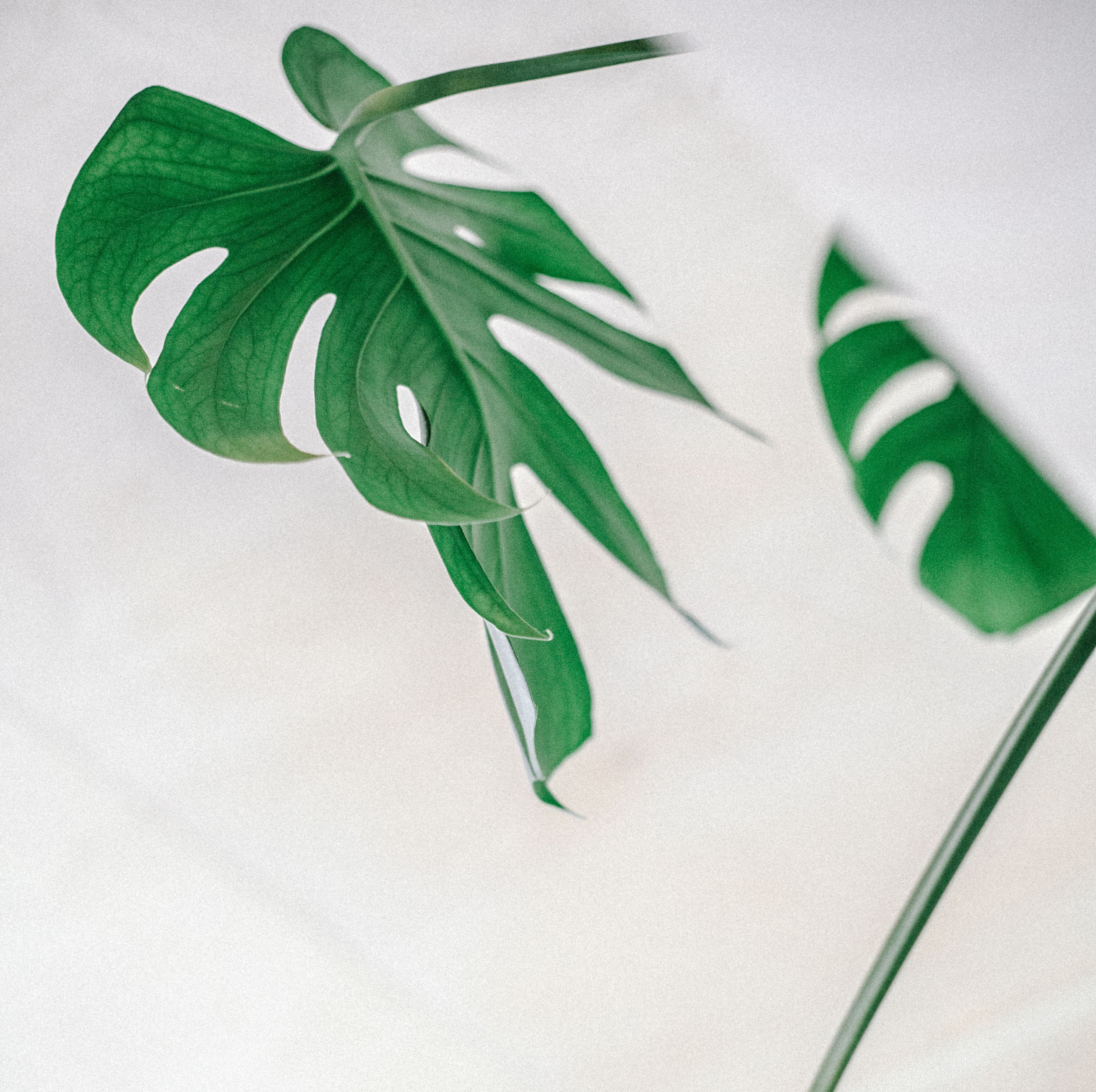 MASAJ Plant2.jpg