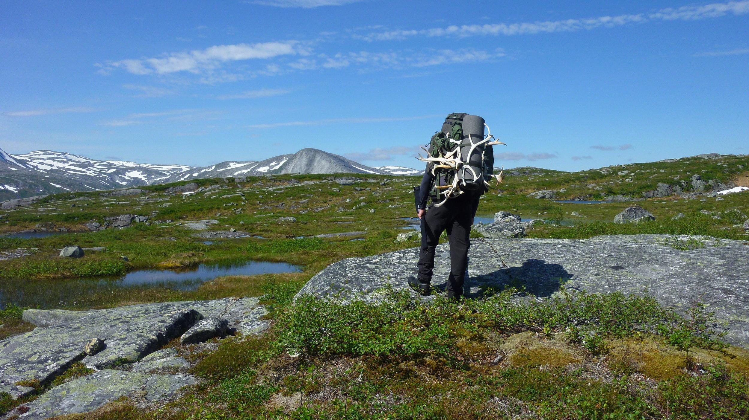 Øst for Store Gåsvatn med utsikt sørvestover mot Frøyningsfjellet
