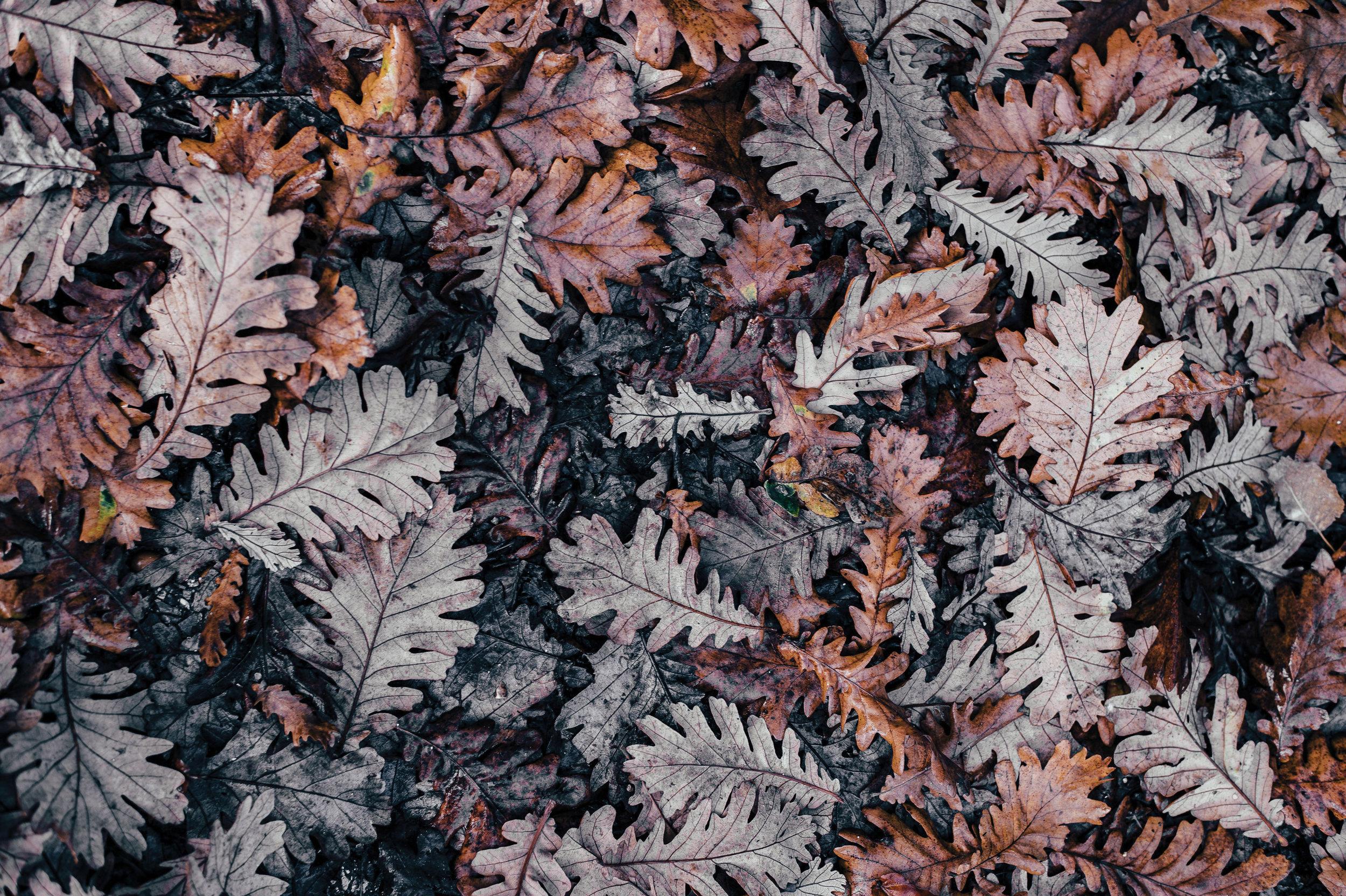 wet-leaves copy.jpg
