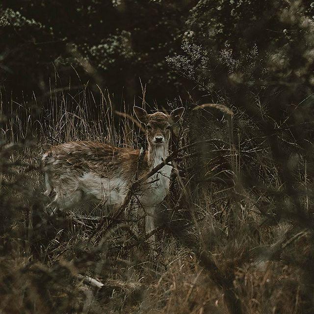 Hey buddy! 😍 #natureisbeautiful