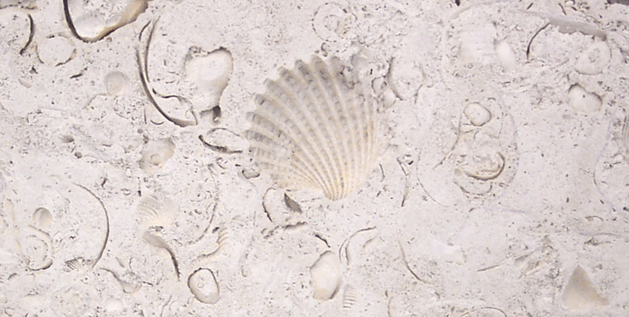 Ostra_with shell closeup_2000x1007_DCP_3568.jpg