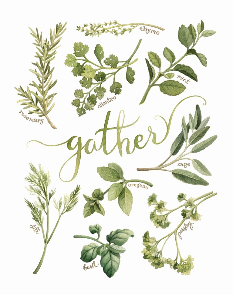 "Herb ""Gather"" Watercolour Illustration by Alicia's Infinity - www.aliciasinfinity.com"