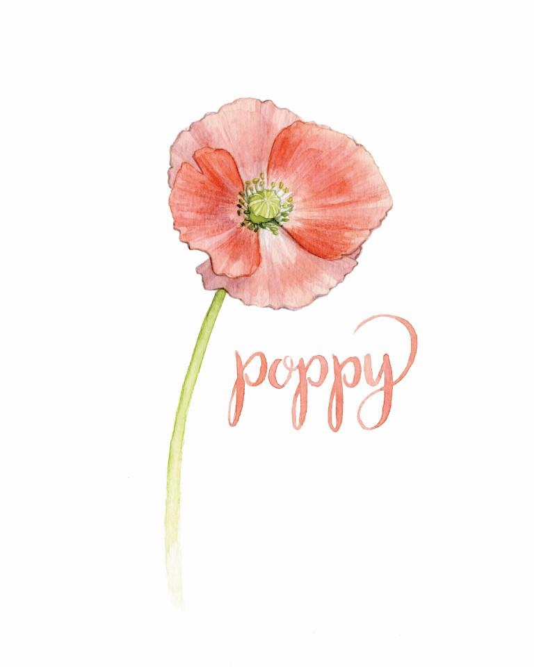 Poppy Watercolour Illustration by Alicia's Infinity - www.aliciasinfinity.com