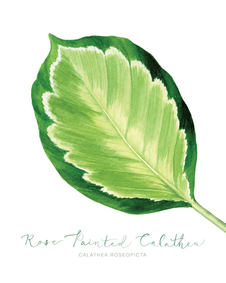 Tropical Leaf Watercolour Illustration by Alicia's Infinity - www.aliciasinfinity.com