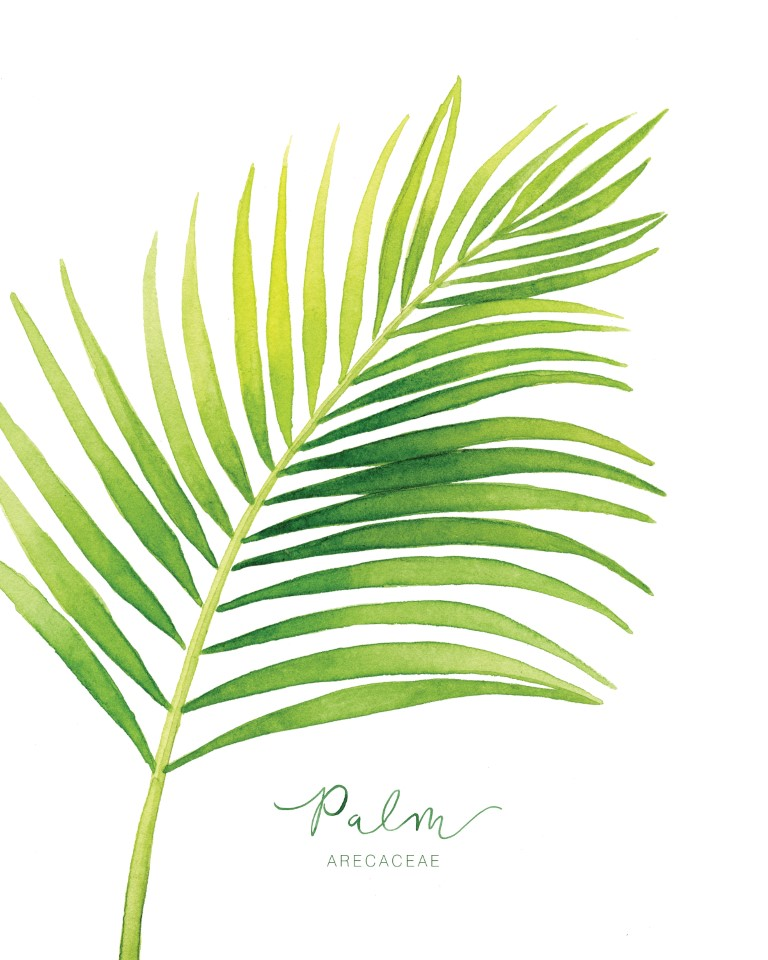 Tropical Palm Leaf Watercolour Illustration by Alicia's Infinity - www.aliciasinfinity.com