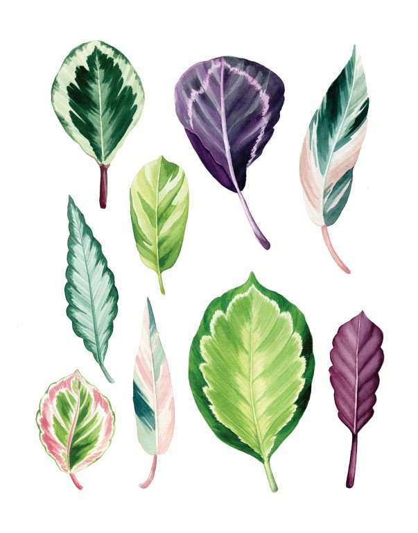 Tropical Leaves Watercolour Illustration by Alicia's Infinity - www.aliciasinfinity.com