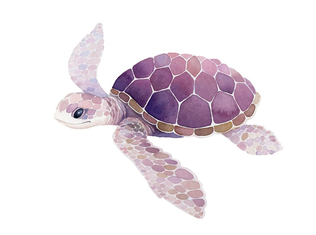 Hayden's Purple Turtle Watercolour Illustration by Alicia's Infinity - www.aliciasinfinity.com