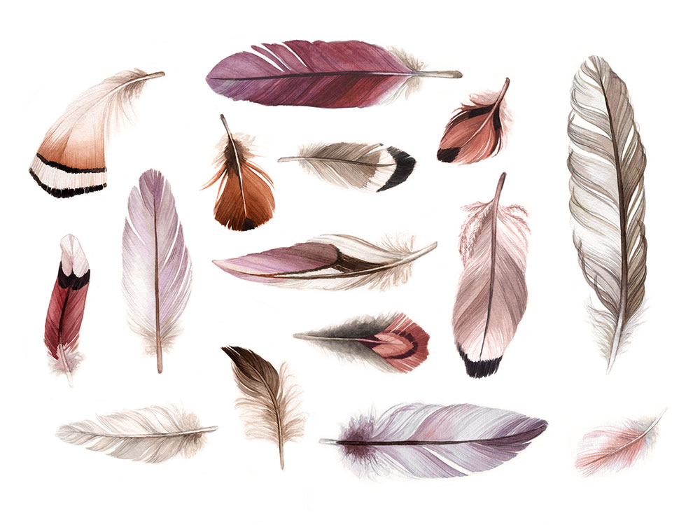 Blush Feathers Watercolour Illustration by Alicia's Infinity - www.aliciasinfinity.com