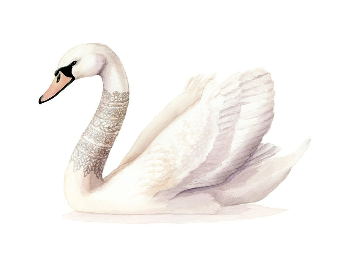 Swan Watercolour Illustration by Alicia's Infinity - www.aliciasinfinity.com