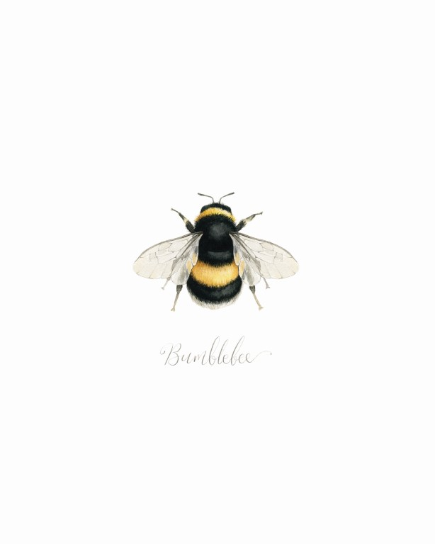 Bumblebee Watercolour Illustration - Alicia's Infinity