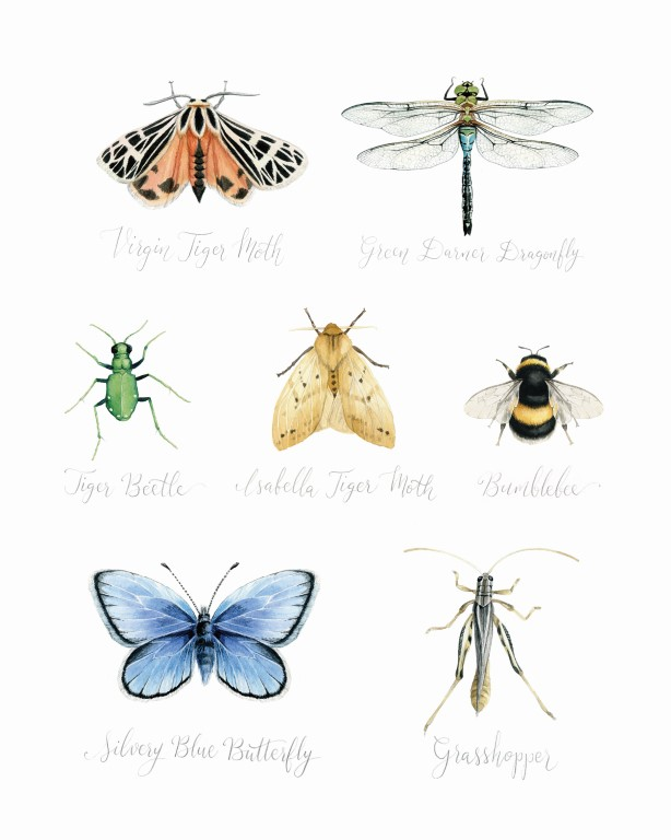 Insects Watercolour Illustration - Alicia's Infinity