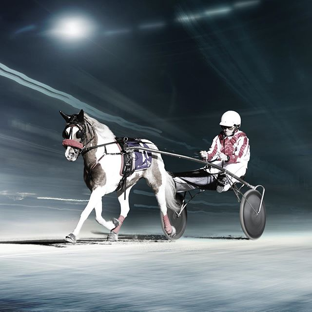 Some terrific Pony Trots Victoria careers come to a close as these young guns graduated. Congrats to Connor Clarke, Jazzy Fusinato, Jordan Leedham, Jordy Chibnall and Sean O'Sullivan.  #harnessracing #horseracing #horse #horses #pony #ponies #ponytrots #thetrots #graduate