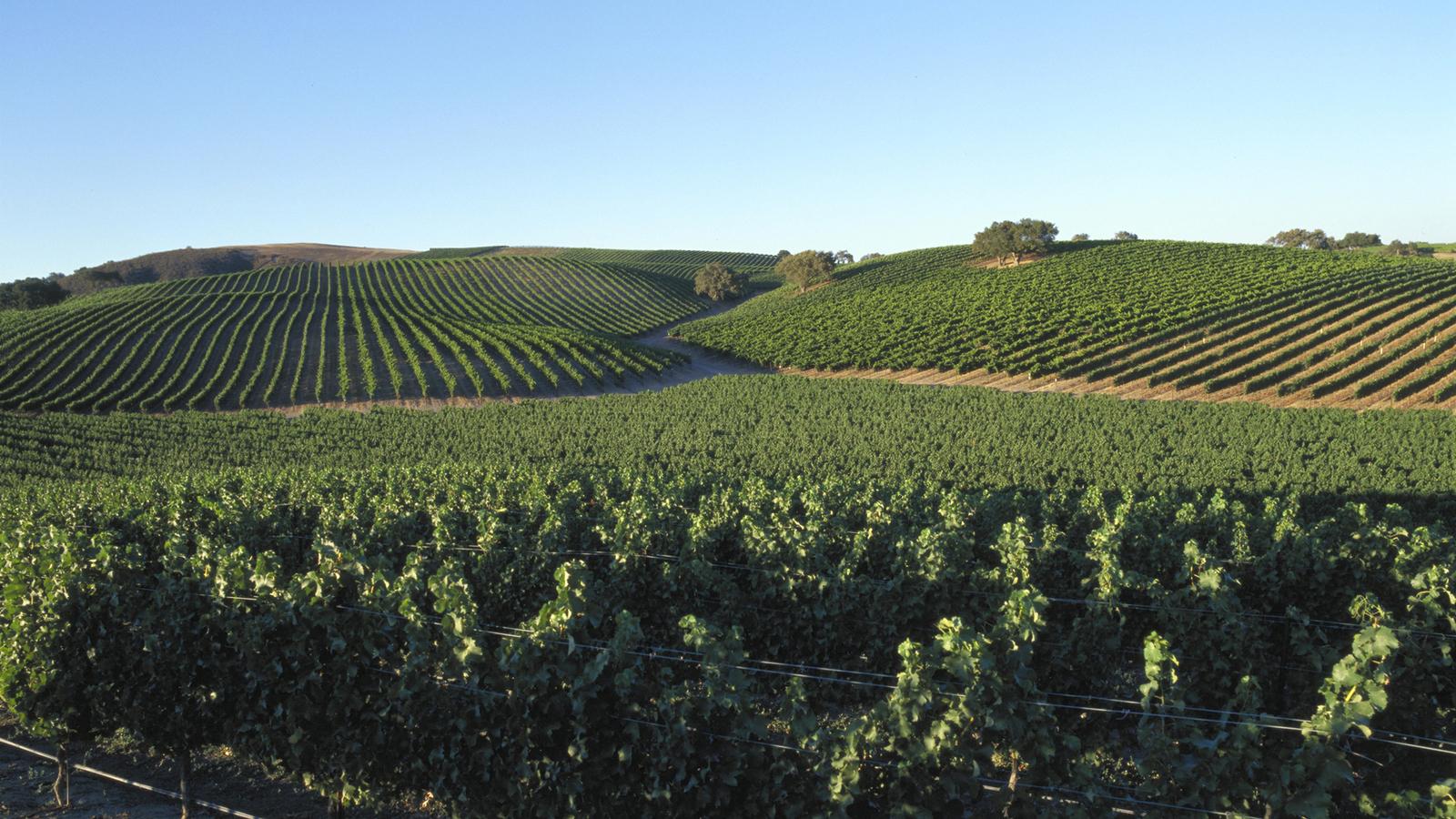 Tres-Hermanas-Winery-Tasting-Room.jpg