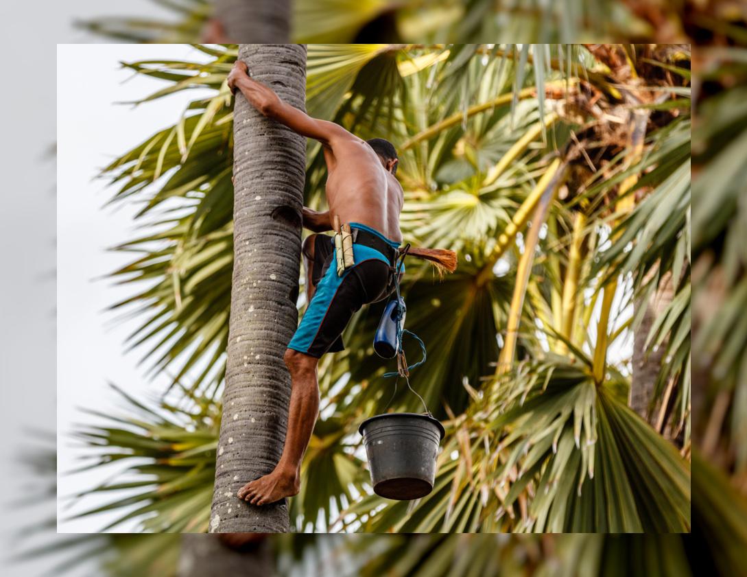 Coconut Sap.jpg
