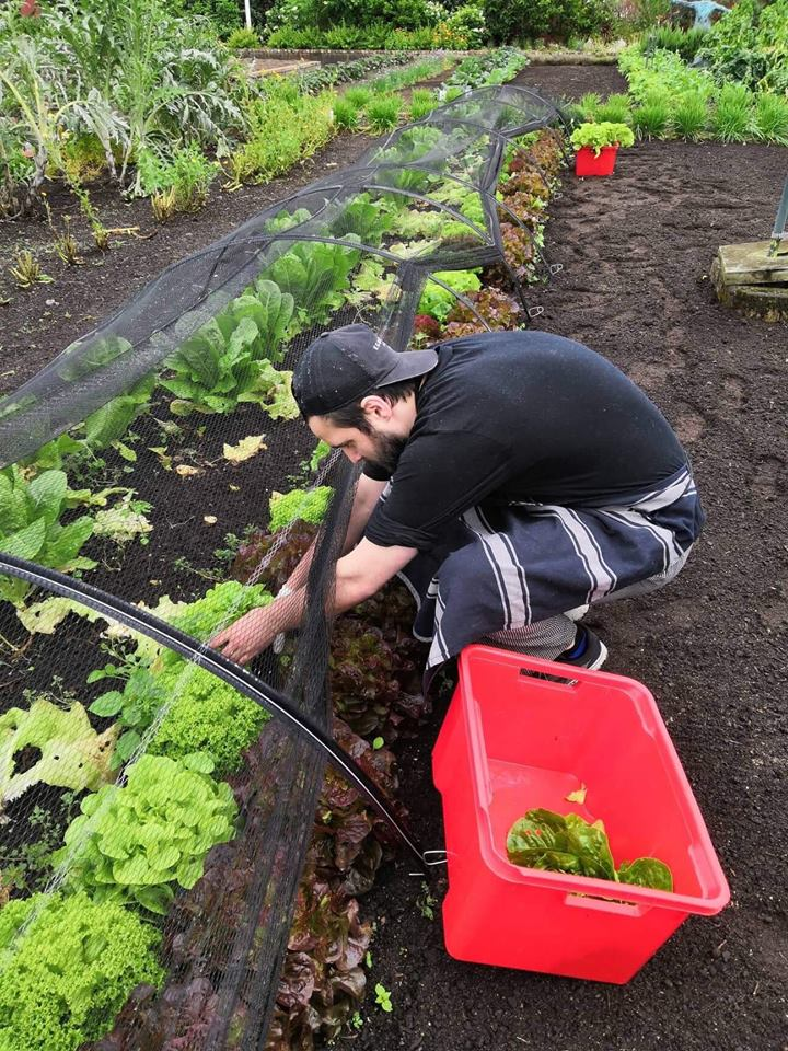 ham gardens kitchen garden in action.jpg