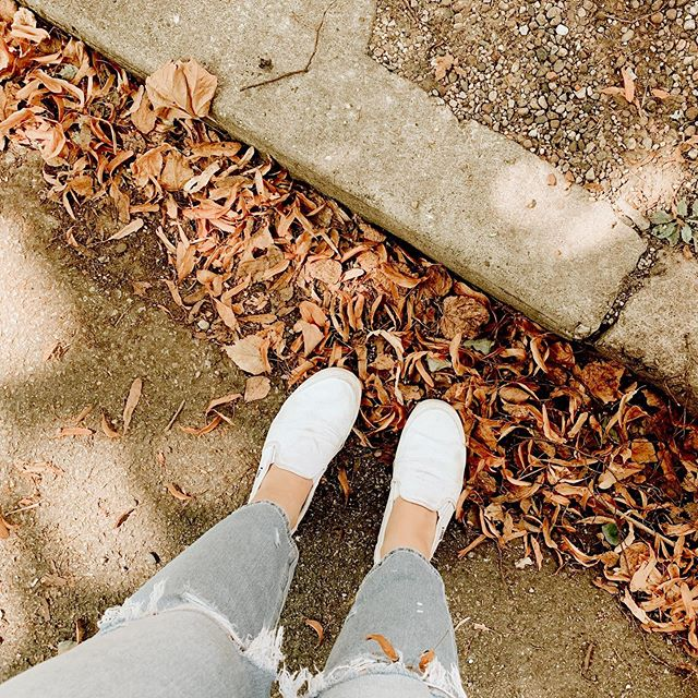 My favorite time of year is almost here 🖤🍂🎃🍁🧡 || Crunchy leaves, colder days, and SWEATERS!! . . . . . . #ootd #ootdblogger #fall #autumn #cityautumn #chicago #chicagobrides #midsize #midsizeblogger #bodypositive #vans #travelblog #beautyblog #aexme #cosy