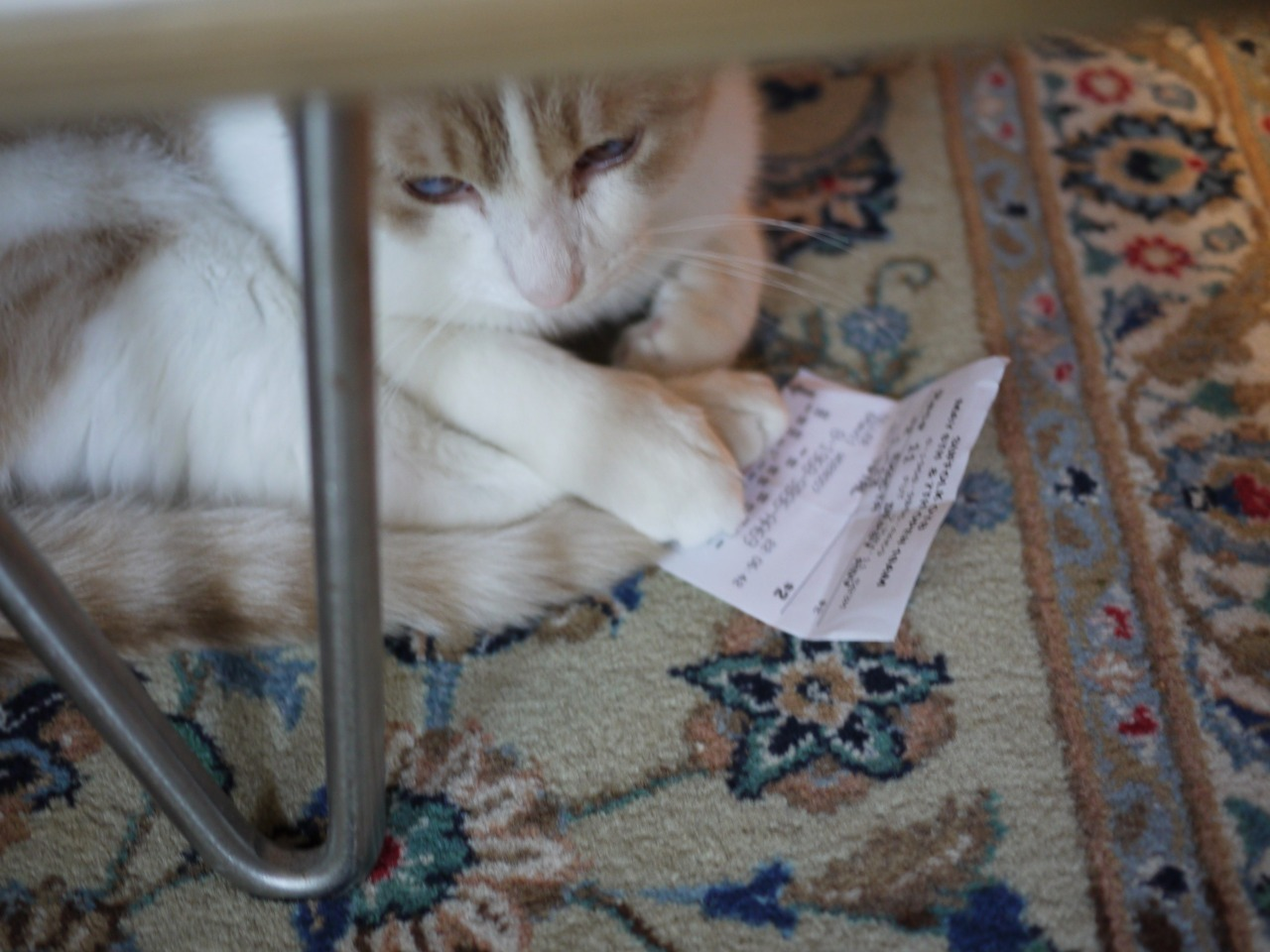 During the Kentucky Derby it dawned on me… Steve is a compulsive gambler!