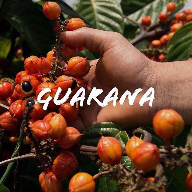 Wild&Wise'ın vazgeçilmez meyvesi Guarana:✨Doğal enerji kaynağıdır.✨Hafızayı güçlendirir.✨Odaklanmayı kolaylaştırır.✨Yorgunluğu azaltır.✨Atletik performansı arttırır.