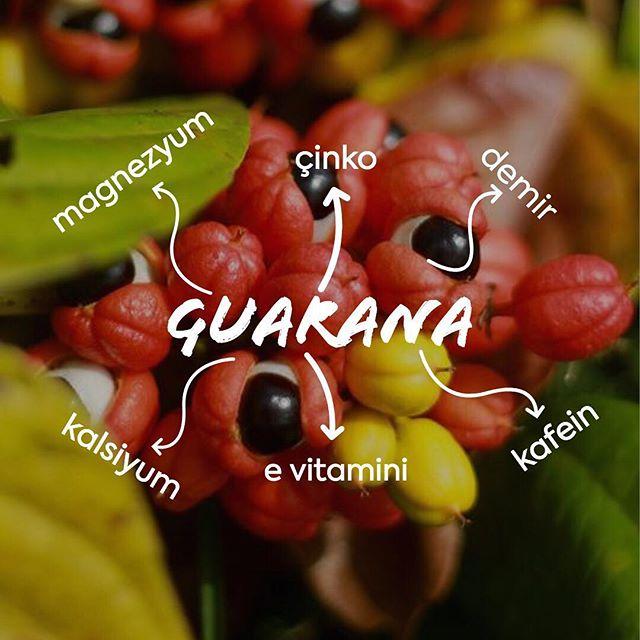 Gücümüzü Amazon'ların mucizevi meyvesi Guarana'dan alıyoruz demiştik. ''Nasıl bir güç?'' dediğinizi duyar gibiyiz. Magnezyum, çinko, demir, kalsiyum, e vitamini ve kafein'in birleşiminden doğan enerji ve canlılık veren bir güç! #bewildandwise