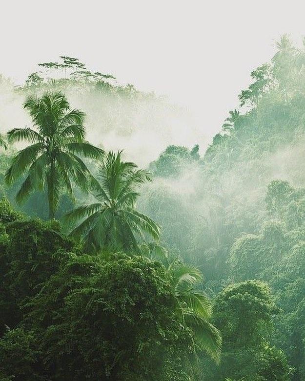 Tüm iyi şeyler doğadan geliyor. #amazonforest #bewildandwise