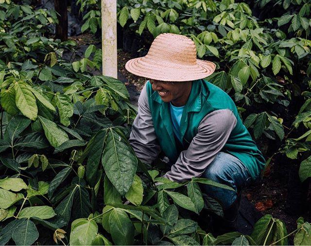 Dışarısı soğuk ve ıslak. Rotamızı Brezilya'ya, Guarana bahçelerine çeviriyoruz. 'Ne mi görüyoruz?' Tropikal iklimin içimizi ısıtan renklerini, haylaz bir gülümseyle guarana toplayan Brezilya'lı bir çiftçiyi ve Wild&Wise'ın ana maddesinin yetiştiği toprakların ferahlığını. #bewildandwise